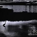 Moon N Ma Bird 2 by Robert McCubbin