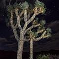 Moon Over Joshua - Joshua Tree National Park In California by Jamie Pham