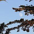 Moon Over Morro Bay by Douglas Miller
