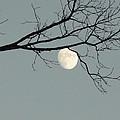 Moon Peaking Thru At 5pm by Stephanie Irvin