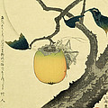 Moon Persimmon and Grasshopper by Katsushika Hokusai