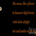 Moon -quote - Poem by Barbara Griffin