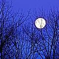 Moon by Sarah Loft