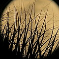 Moon Through The Palms by Zina Stromberg