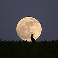 Moongazer by Steve Adams