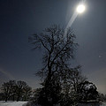 Moonlight And The Snow by Angel Ciesniarska