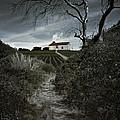 Moonlight Farm by Carlos Caetano