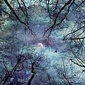 Moonlight by Stelios Kleanthous
