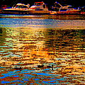 Moonlight Swim Boats And Ducks Navigate North Shore St Lawrence Lachine Canal Quebec Carole Spandau by Carole Spandau
