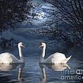 Moonlight Swim by Juli Scalzi