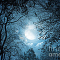 Moonlight With Forest by Boon Mee
