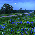 Moonlit Bluebonnets by Tom Weisbrook