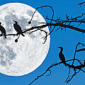 Moonlit Cormorants by Donna Pagakis