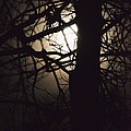 Moonlit Tree In The Forest by Maria Urso