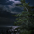 Moonlit Treescape by Marty Saccone