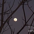 Moonrise by Susan Williams