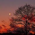 Moonset by Kathryn Meyer
