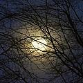 Moonshine by Maria Urso