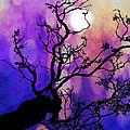 Moonshine by Nicola Morgan