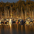 Moored Sailboats by Jani Freimann