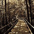 Moores Creek Battlefield Nc Swamp Walk  by Tommy Anderson