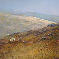 Moorland Sheep by James Martin