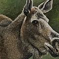 Moose II by C Ryan Pierce