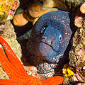 Moray And Starfish by Roy Pedersen