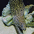Moray Eel by Sandi OReilly