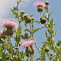 More Blooming Weeds by David Pennington Sr