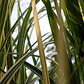 More Tall Grass by Carolyn Stagger Cokley
