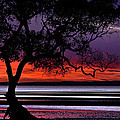 Moreton Bay View by Robert Charity