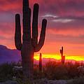 Morning Arizona Style  by Saija  Lehtonen