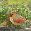 Morning Cardinal by Debbie Portwood