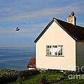 Morning Cottage At Lyme Regis by Susie Peek