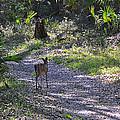 Morning Deer by Deborah Good