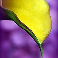 Morning Dew by Karen Wiles