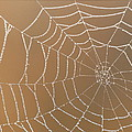 Morning Dew On Web by April Copeland