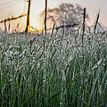 Morning Dew - View Through The Grass by Justin Murazzo