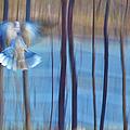 Morning Dove by Theresa Tahara