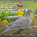 Morning Dove With Verse by Debbie Portwood