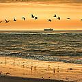 Morning Flight by Diana Powell