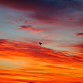 Morning Flight by Jeffery L Bowers