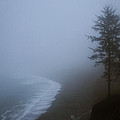 Morning Fog At Agate Beach by Robert Woodward