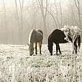 Morning Frost by Annette Persinger
