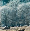 Morning Frost by Scott Hafer