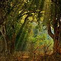 Morning Glory by Manjot Singh Sachdeva