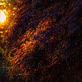 Morning Glow by Gavin Baker