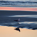 Morning Gull by Bill Cannon
