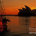 Morning In Sydney Harbour by Inge Riis McDonald